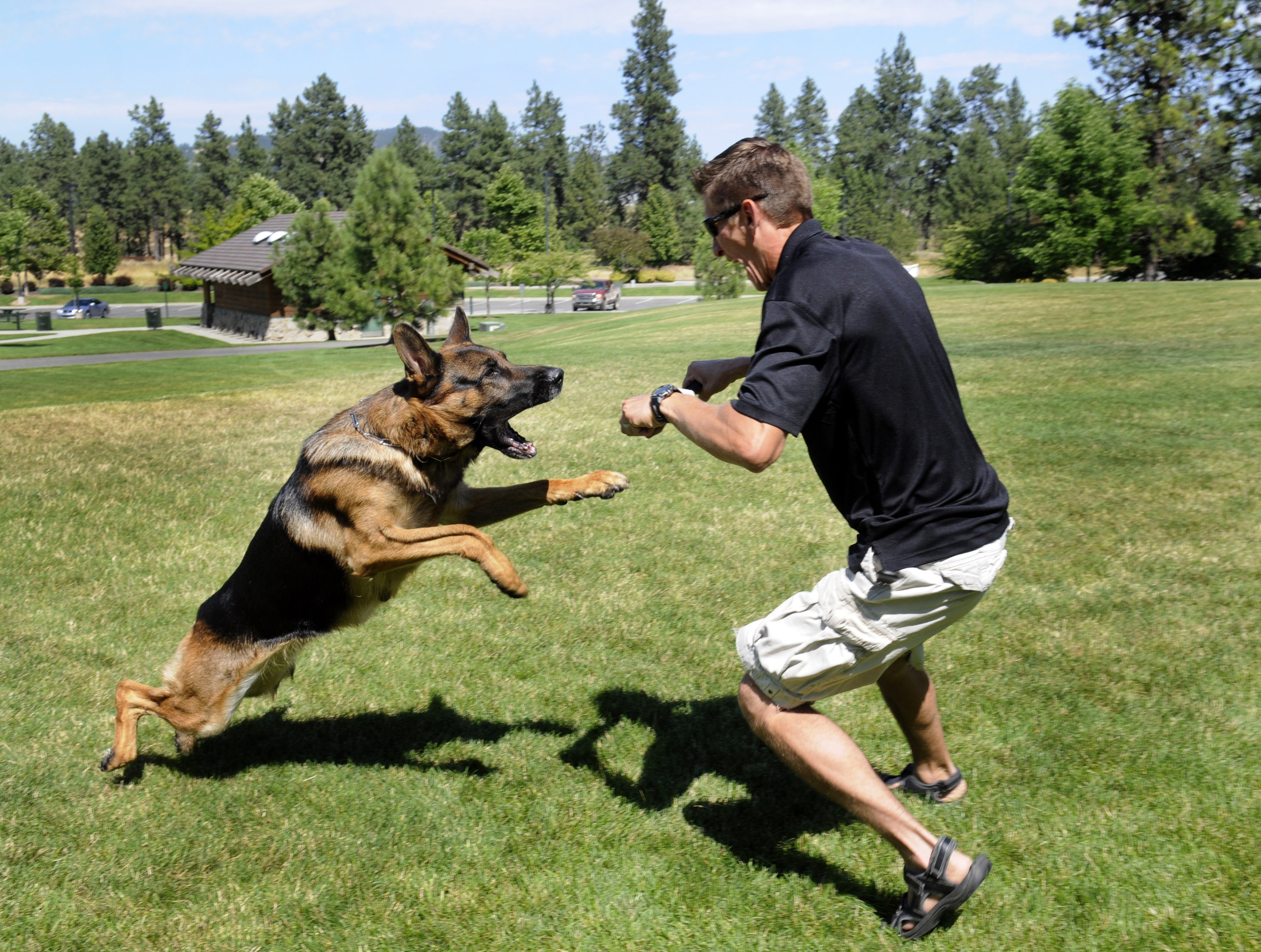 Tips to Train Your German Shepherd Dog – Dog Obedience Training