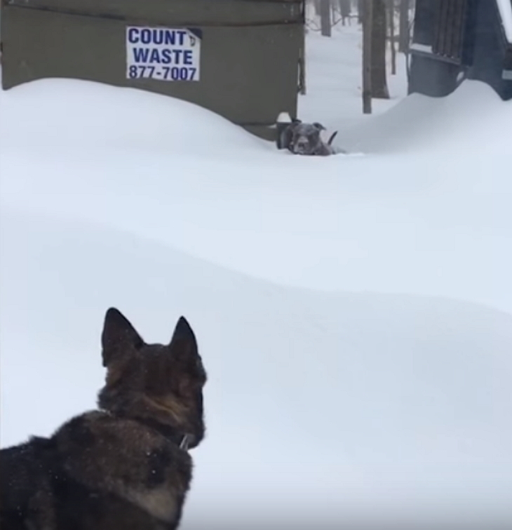 Helpless Dog Stuck In Pile Of Snow, Suddenly Spots German Shepherd Lunging Towards Him