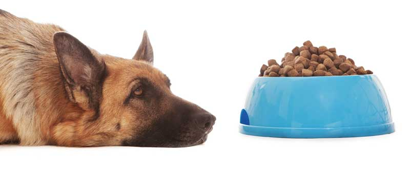 Dangers !! Commercial Dog Food