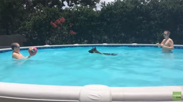 German-Shepherd-Plays-Monkey-In-The-Middle-With-Her-Owners-In-The-Pool-627x349