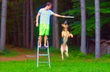 How High Do You Think A German Shepherd Can Jump!