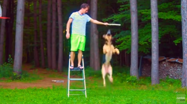 How-High-Do-You-Think-A-German-Shepherd-Can-Jump-627x349