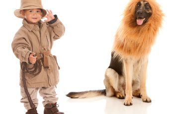 Keep your German Shepherd Dog Safe This Halloween